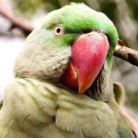 by John Phielix - Animals Birds