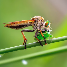 by MazLoy Husada - Animals Insects & Spiders