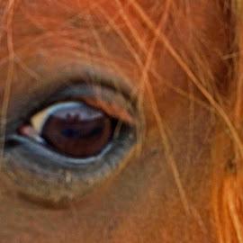 Here is looking at you by Will McNamee - Animals Horses ( dld3us@aol.com, gigart@aol.com, aundiram@msn.com, danielmcnamee@comcast.net, mcnamee2169@yahoo.com, ronmead179@comcast.net,  )