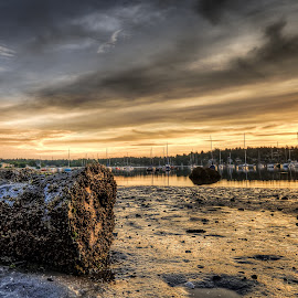 Dawn Flotsam by Jerry Kambeitz - Landscapes Beaches ( sand, sailboats, barnacles, stump, dawn, ocean, sunrise )