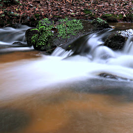 Water in the river by Gil Reis - Nature Up Close Water ( water, life, nature, forest, places, stones )