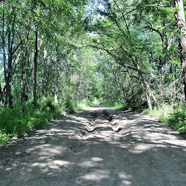 4wheelers like our road by Michael Collier - Transportation Roads (  )