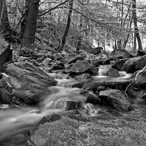 by Siniša Almaši - Black & White Landscapes ( water, up close, stream, black & white, forest, landscape, woods, depth, nature, cascade, trees, view, stones, light, rocks, river,  )