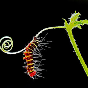 caterpillars by Kristanda Junior - Animals Insects & Spiders