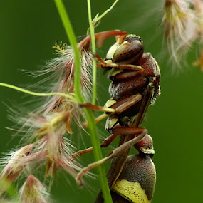 bugs by Ateddi S - Animals Insects & Spiders