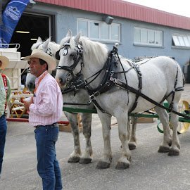 Getting ready to work by HAPPY media4U - Animals Horses ( farm, working horse, horses, farm animal, draft horse )