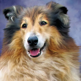Stormy by Angelica Glen - Animals - Dogs Portraits ( collie, animals, painted, dogs, portrait,  )