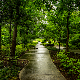 Woodlands City Park by Joseph Law - City,  Street & Park  City Parks ( bushes, texas, trees, walkway, woodland, wet, city park )