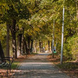 Happy Nature by Adrian Almasan - City,  Street & Park  City Parks