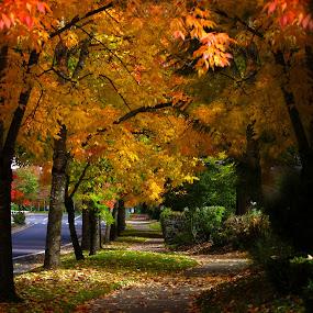 by Todd Klingler - City,  Street & Park  Neighborhoods