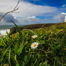 the sky is good by Brandon Hemphill - Novices Only Flowers & Plants ( white flower, sky, grass, oregon coast, flowers )