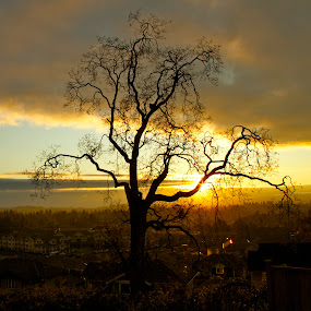 Tree on a hill by D. Bruce Gammie - Landscapes Mountains & Hills ( hill, tree, sunset, victoria, spring )
