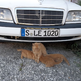 . by Georgi Kolev - Uncategorized All Uncategorized ( котки., кола., uf.d=, бял., път., цветове. )