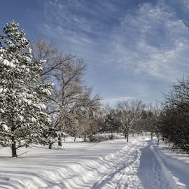 Winter by Garces & Garces - City,  Street & Park  City Parks ( winter, cold, canada, freeze, saskatchewan, snow, frozen, prairie, regina )