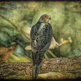 by Stephen Hooton - Digital Art Animals