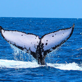 tails up! by Jason Day - Animals Other Mammals