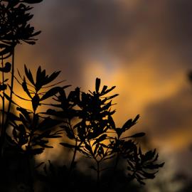 Setting silhouette by Grace Yap - Uncategorized All Uncategorized ( sky, nature, sunset, silhouette, abstract,  )