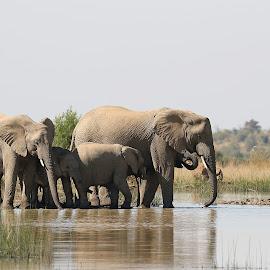 by Jeff Abel - Animals Other Mammals