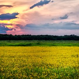 Myakka River State Park by Joe Saladino - Landscapes Sunsets & Sunrises ( sunset, daisies, landscape )