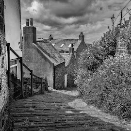 Down Donkey Road by Darrell Evans - Black & White Buildings & Architecture ( plant, clouds, old, building, grass, flora, green, street, stone, whitby, donkey road, house, roof, cobbles, tiles, flowers & plants, sky, yorkshire, no people, outdoor, path, walkway, chimney, flower )