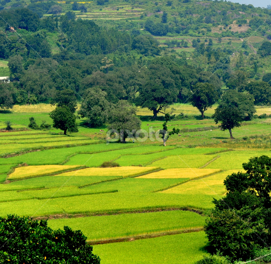 araku valley 2 by Subrata Chatterjee - Travel Locations Landmarks ( buses, stock, andhara pradesh, travel location, araku valley, india )