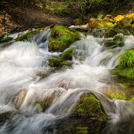 Paris Spring by Roxie Crouch - Landscapes Waterscapes ( water, idaho, bear lake, waterscape, spring )