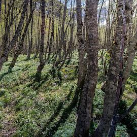 by Sverre Sebjørnsen - Landscapes Forests