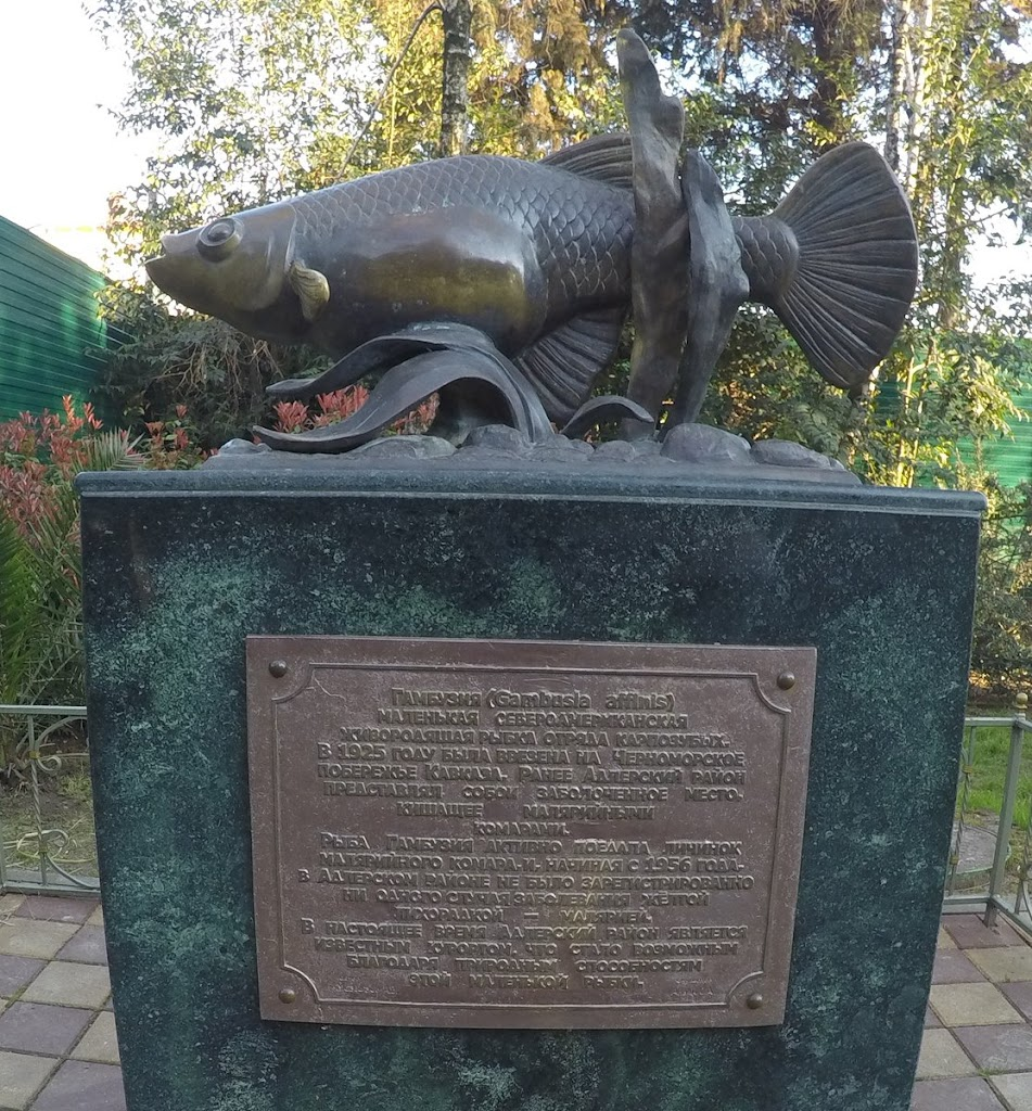 A monument erected in Sochi dedicated to Gambusia affinis, a fish that eats malaria mosquito larvae. The city used to be a malaria hotspot, but 30 years after the fish's introduction there were no ...