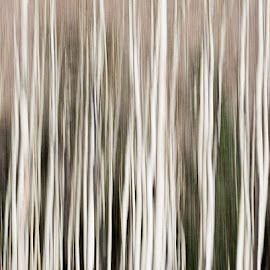 Aspen Abstract  by Melissa Stanton - Abstract Patterns ( nature, tree trunks, art, white, trees, aspens, motion, black, motion blur, absract, aspen )