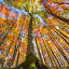 Maple tree by Stanislav Horacek - Nature Up Close Trees & Bushes