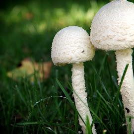 by Karen McKenzie McAdoo - Nature Up Close Mushrooms & Fungi