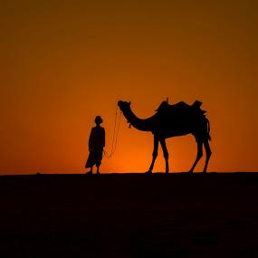 Desert  transportation by Monish Kumar - Transportation Other (  )
