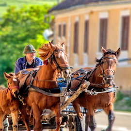 By country by Mihai  Costea - City,  Street & Park  Street Scenes ( horses, cart, rural, country )