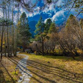 by Utsha Guha - Landscapes Forests