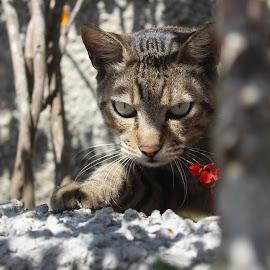 A curiosidade esta no ar by Larissa Oliver - Animals - Cats Kittens
