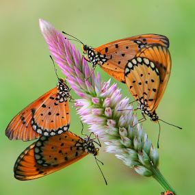 two couples and a guest by Anif Putramijaya - Animals Insects & Spiders