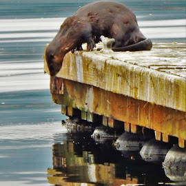 Wild Otter by Lavonne Ripley - Animals Other