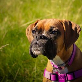 by Derek Martin - Animals - Dogs Portraits (  )