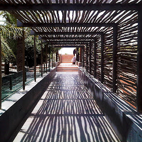 Reed Passage III by Ludwig Wagner - Instagram & Mobile Other ( passage, walkway, shadows, reeds )
