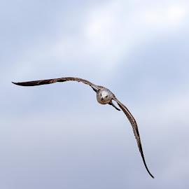 by Kishu Sing - Animals Birds