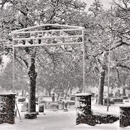 by Trudy Mader - City,  Street & Park  Cemeteries (  )