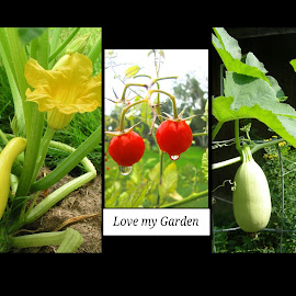 Love my Garden by Rita Goebert - Typography Captioned Photos ( yellow summer squash; sweet 100 tomatoes; spaghetti squash; produce pictures; squash blossom; home gardening; )