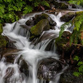 Swedish Creek 8 by Richard Duerksen - Landscapes Waterscapes ( oregon, waterfall, mountain stream, ferns, new sweden, river )