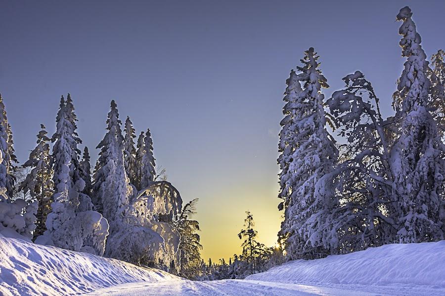 Winterwonderland by Ewa Nilsson - Uncategorized All Uncategorized ( sweden, winter, scandinavia, lapland, snow, trees, light )