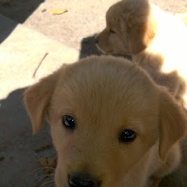 lovely dog by Saurabh Yadav - Animals - Dogs Puppies ( puppy, india, road, cute, dog )