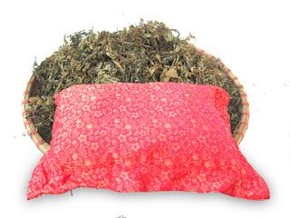 Gối lá đinh lăng thảo dược Việt Nam giúp bạn chăm sóc giấc ngủ