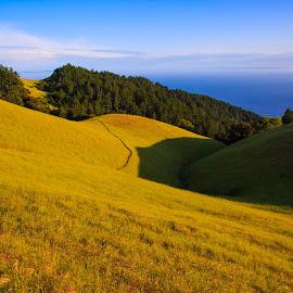 Mt. Tamalpais State Park by Gannon McGhee - Landscapes Mountains & Hills ( park, mt., tamalpais, california, state, tam )
