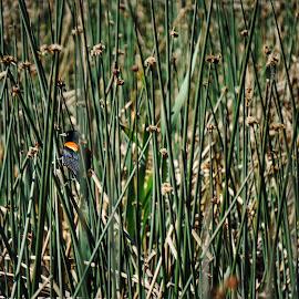 Hidden figures  by Todd Reynolds - Animals Birds