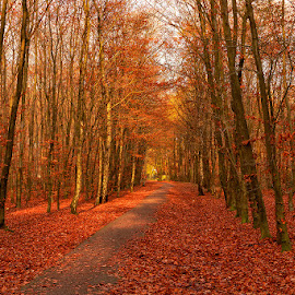 Autumn in the Netherlands by Cora Lea - Landscapes Forests