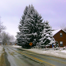 Country Road Snow Scene by Kathy Rose Willis - Landscapes Weather ( galena, illinois, snow, trees, road )